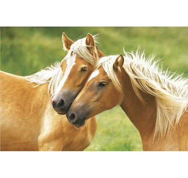 Poster deux chevaux posters grand format commandez d s for Tapis chambre motif cheval
