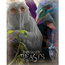 Poster Fantastic Beasts and Where to Find Them -