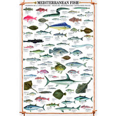 Reproduction Mediterranean Fish