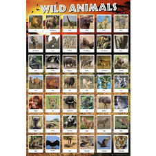 Poster animaux sauvages