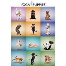 Poster Yoga Puppies Chiots
